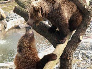 Medvědice Kladno
